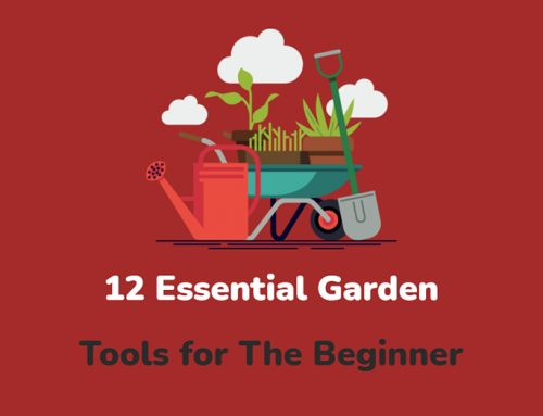 12 Essential Garden Tools for The Beginner